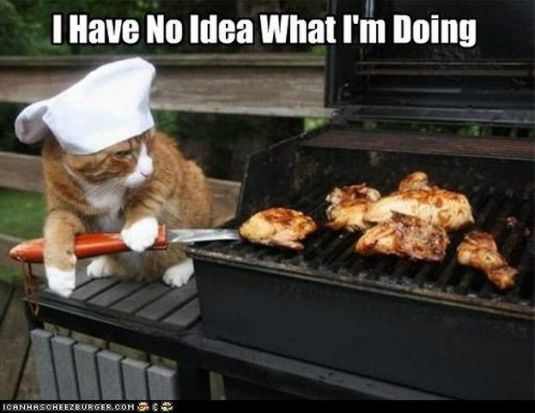 no idea cooking cat